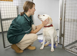 Dog beside Kennel with Vet