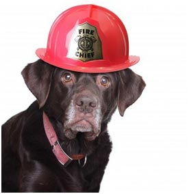 Dog in Firehat