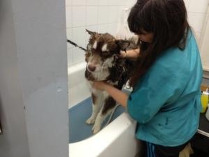 Siku in tub with Peg