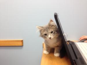 Little kitten behind a laptop
