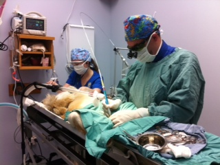 Dr J & Lindsay in Surgery