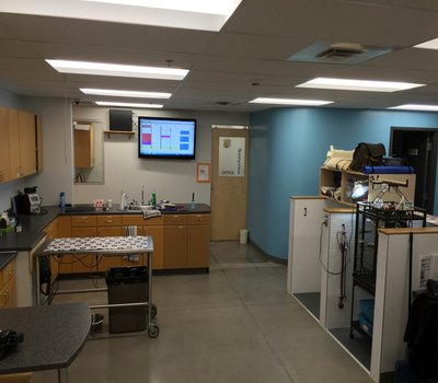 Showing our Treatment area with heated Induction Table, and electronic Whiteboard to see any & all patient needs!