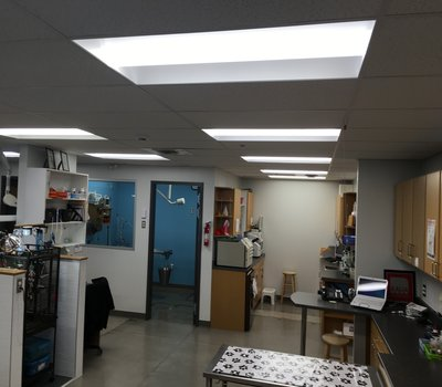 Our Treatment area, showing our heated anesthetic induction area, Lab Area, and work stations allowing an unrestricted view of your pet while they are with us!