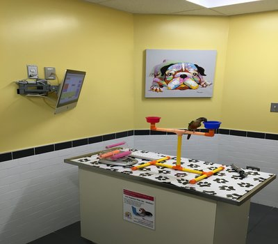 Bird Exam Room with Skittles - we will weigh, examine, and perform any beak, wing, or nail trims with you present - likely your bird (or any pet) will be happier with their care-givers in the room!
