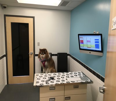 By allowing your Pet to sit or stand where they want reduces their concerns and yours!  We also use pheromone therapy to reduce your pet's anxiety!  This way Sunnyview is a 'Fear Free' option for your pets!