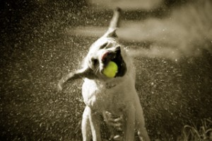 153530028 dog shake