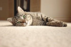 Mailer-cat-300x200