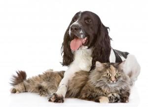 iStock-531634678_dog_cat-300x217