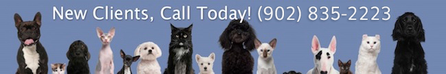 group of white and black dogs and cats in front of blue background - New Client, call us today!